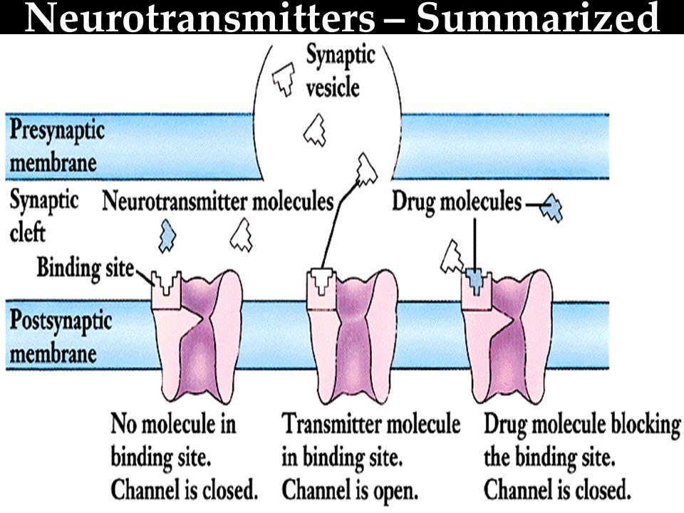 Neurotransmitters – Summarized