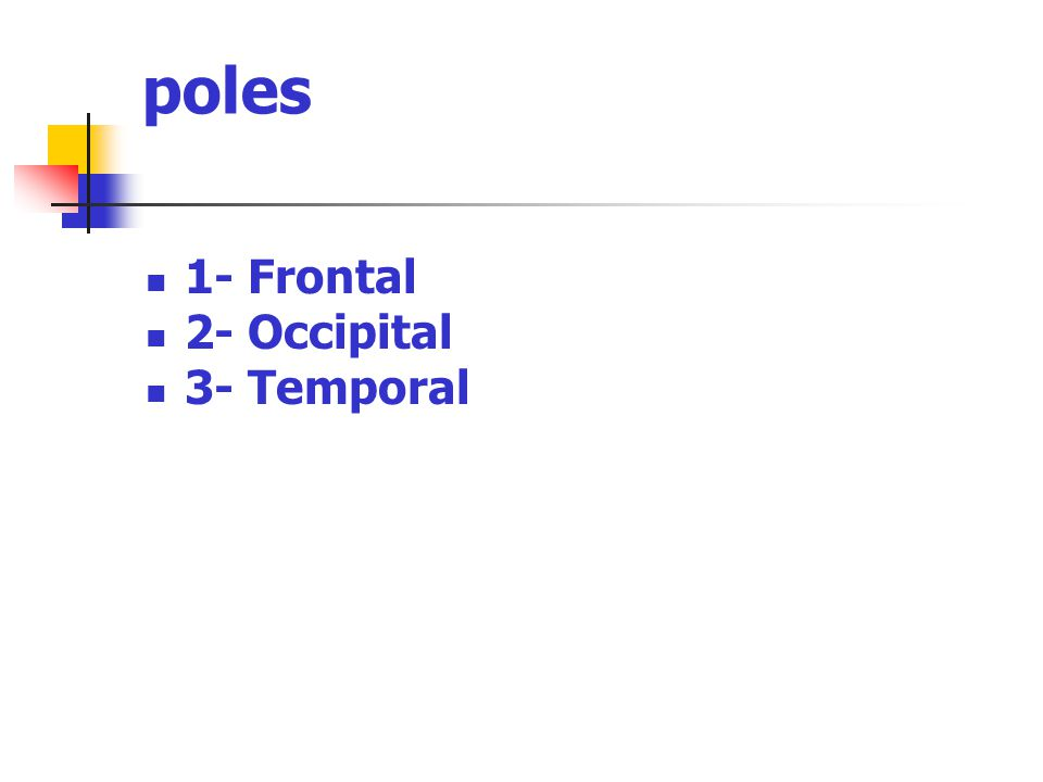 poles 1- Frontal 2- Occipital 3- Temporal