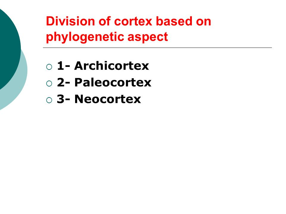 Division of cortex based on phylogenetic aspect