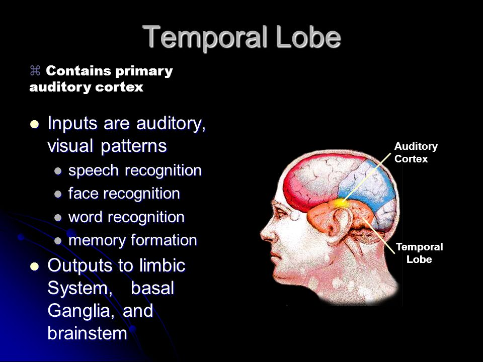 Temporal Lobe Inputs are auditory, visual patterns