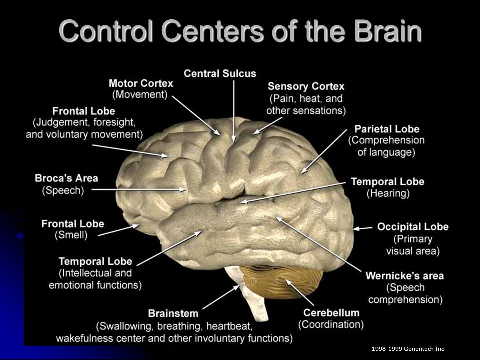 Control Centers of the Brain
