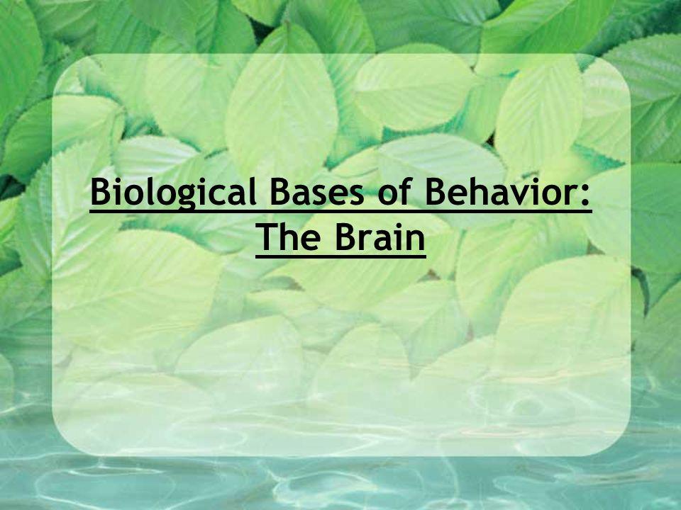 Biological Bases of Behavior: The Brain