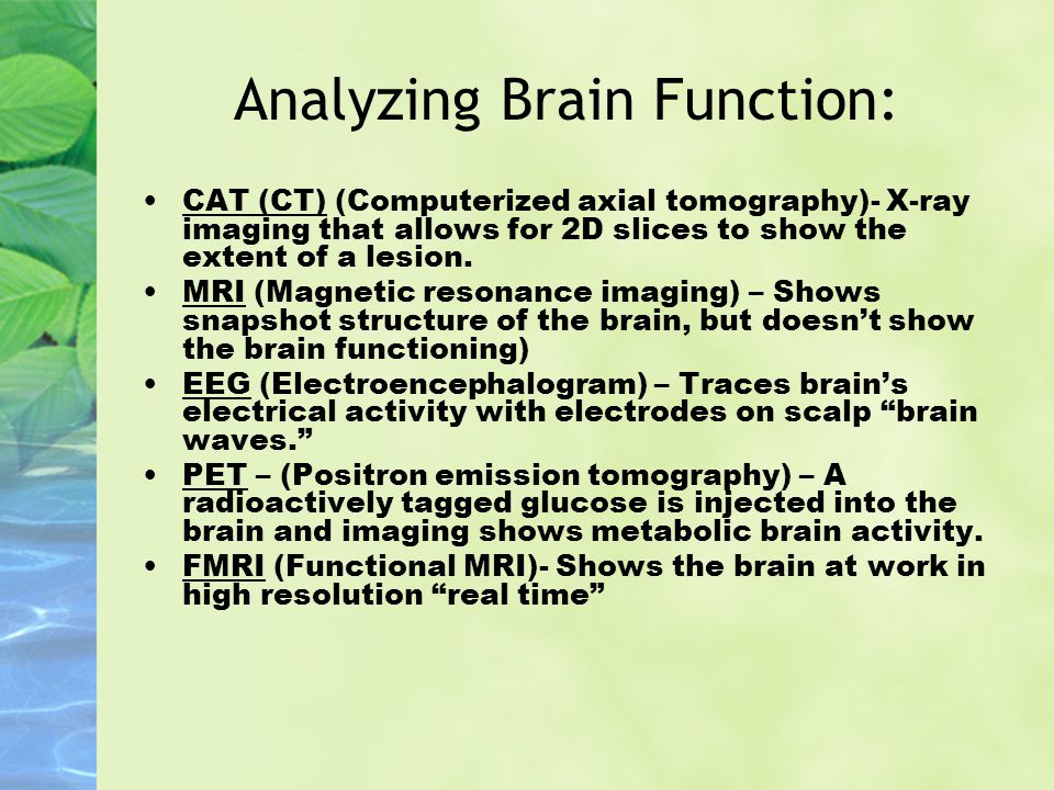 Analyzing Brain Function: