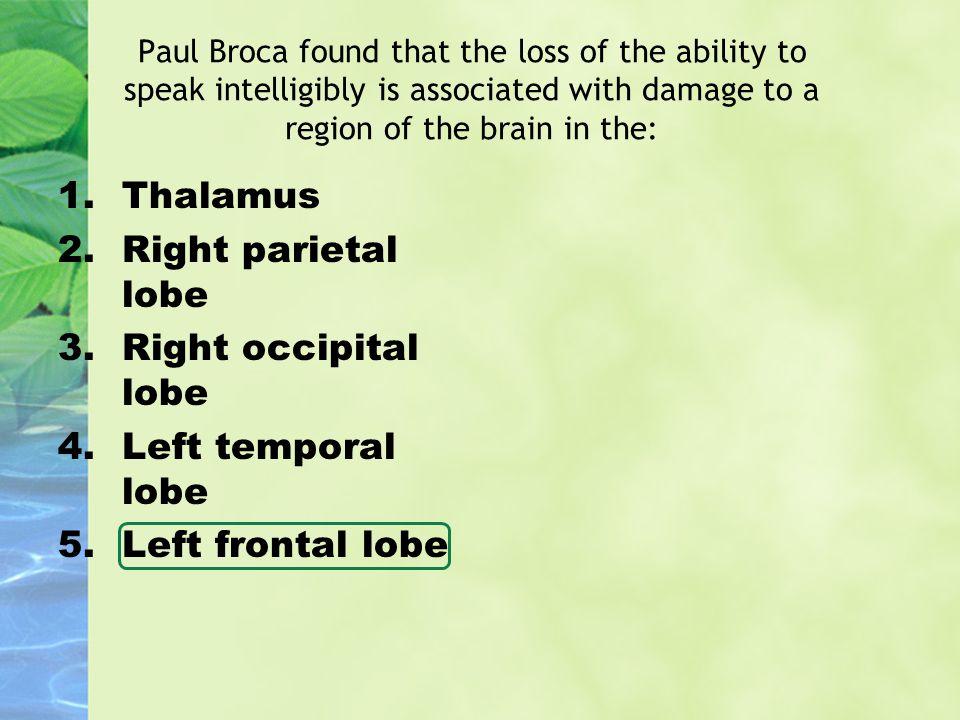 Thalamus Right parietal lobe Right occipital lobe Left temporal lobe
