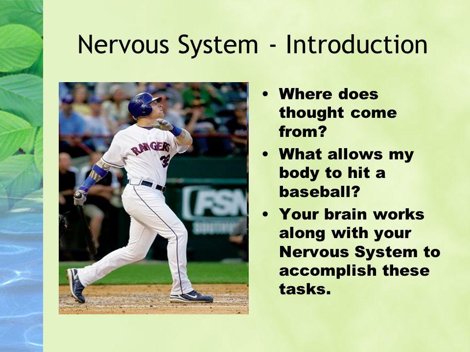 Nervous System - Introduction
