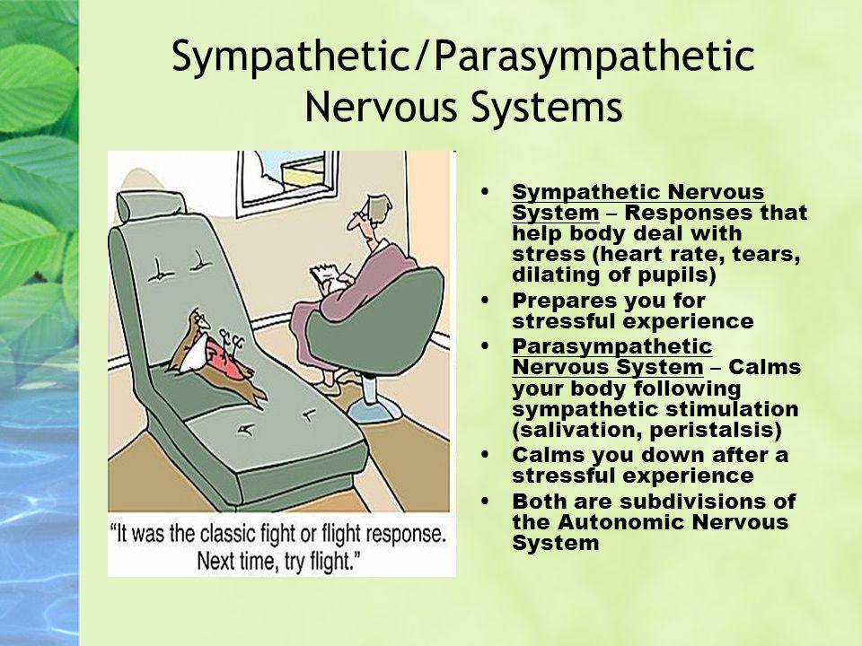 Sympathetic/Parasympathetic Nervous Systems