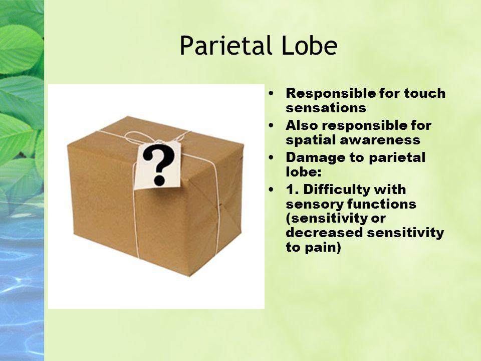 Parietal Lobe Responsible for touch sensations