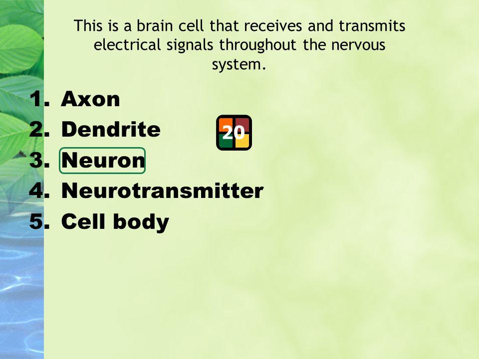 Axon Dendrite Neuron Neurotransmitter Cell body 20