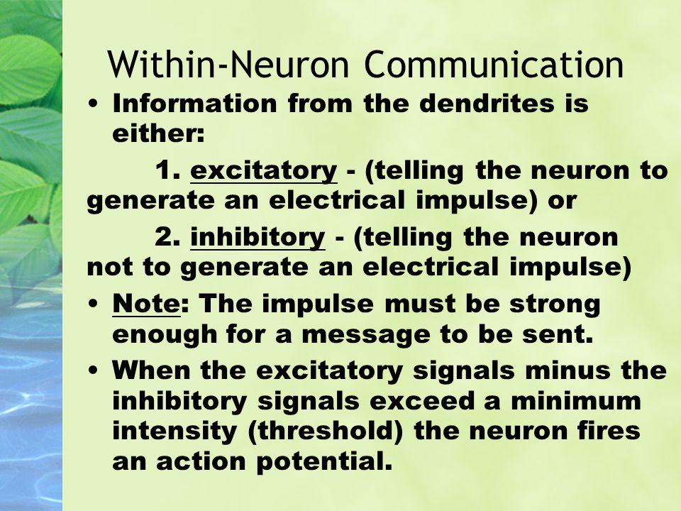 Within-Neuron Communication