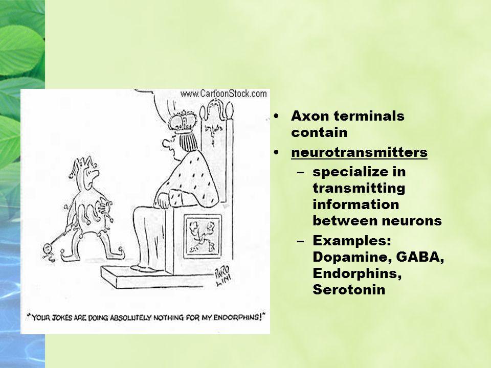 Axon terminals contain