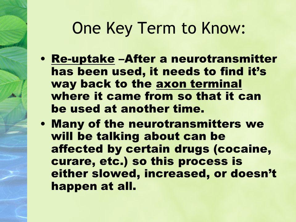 One Key Term to Know: