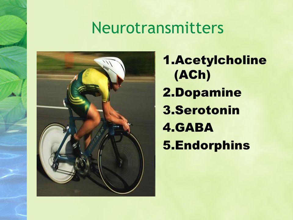 Neurotransmitters Acetylcholine (ACh) Dopamine Serotonin GABA