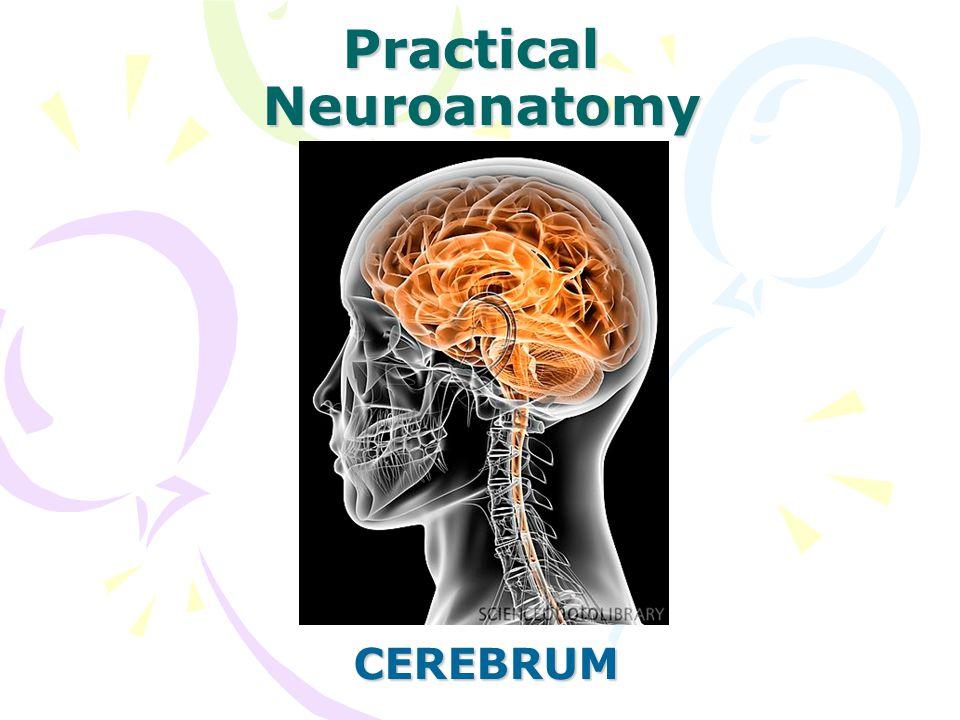 Practical Neuroanatomy