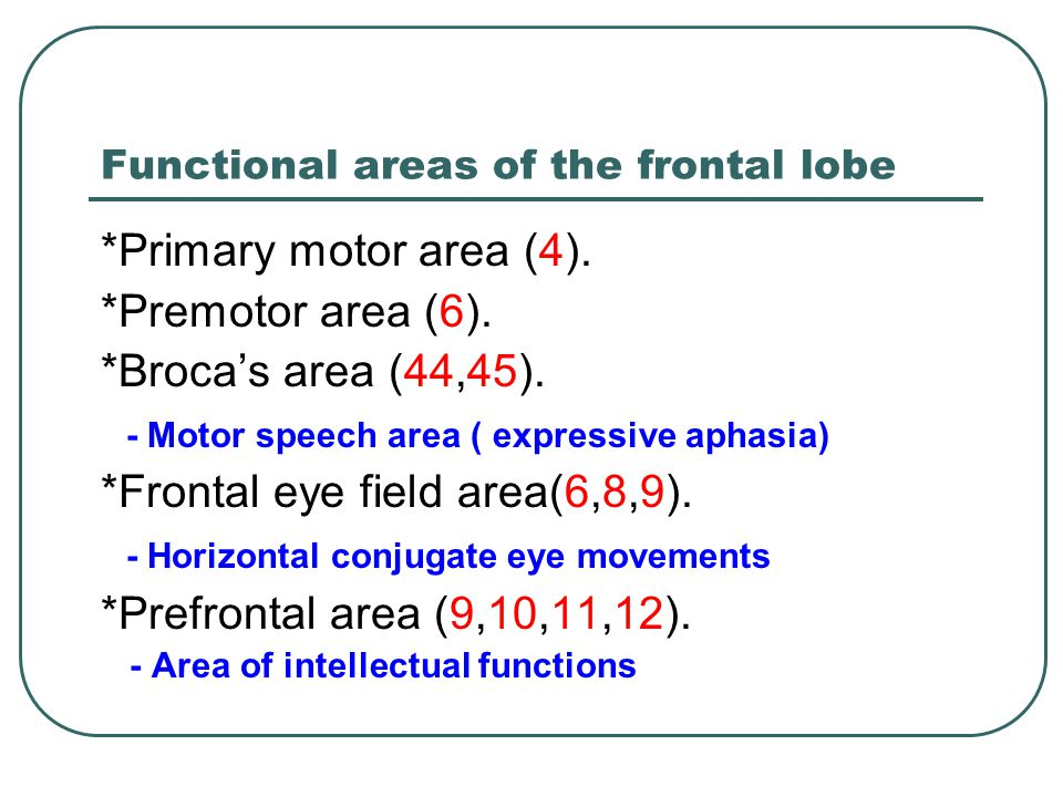 Functional areas of the frontal lobe
