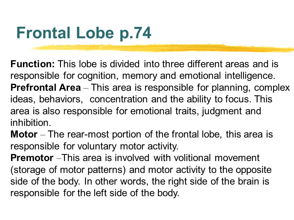 Frontal Lobe p.74 Function: This lobe is divided into three different areas and is responsible for cognition, memory and emotional intelligence.