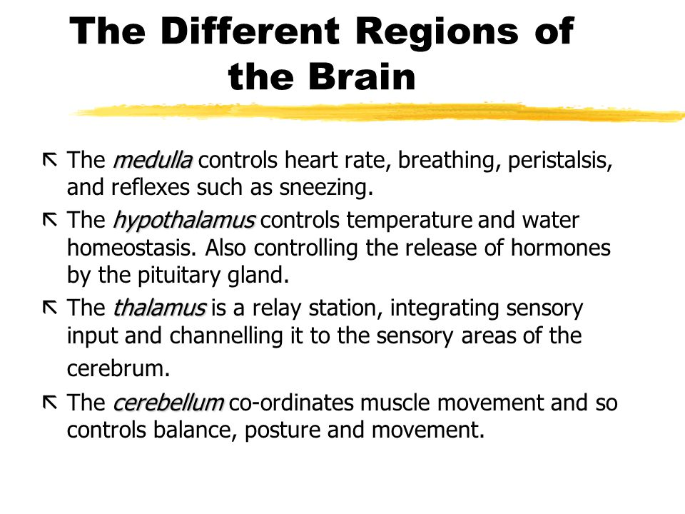 The Different Regions of the Brain
