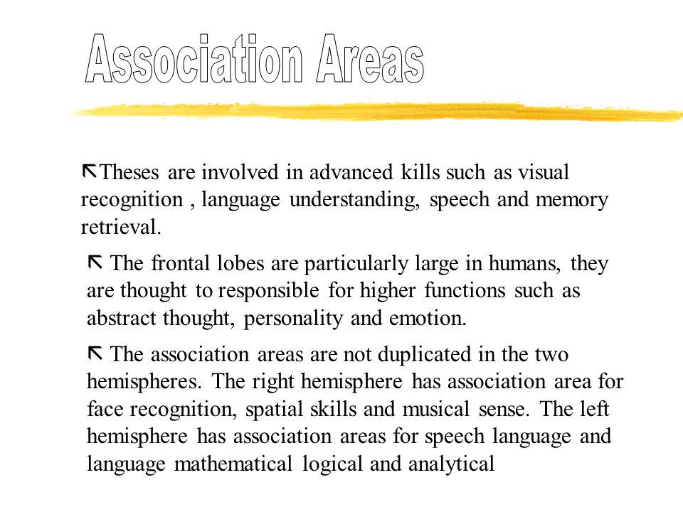Association Areas Theses are involved in advanced kills such as visual recognition , language understanding, speech and memory retrieval.