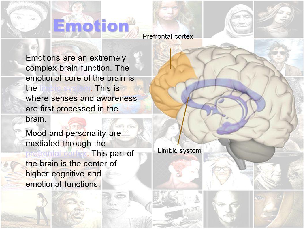 Emotion Prefrontal cortex.