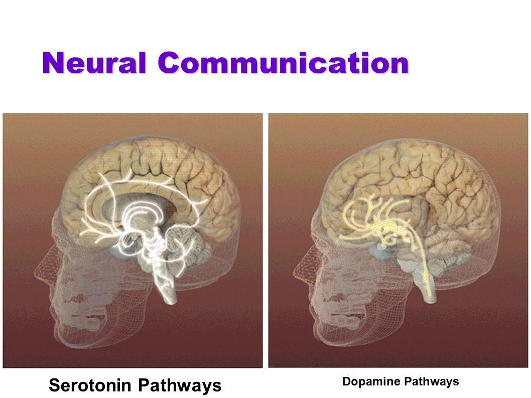 Neural Communication Dopamine Pathways Serotonin Pathways