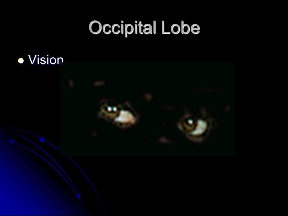 Occipital Lobe Vision