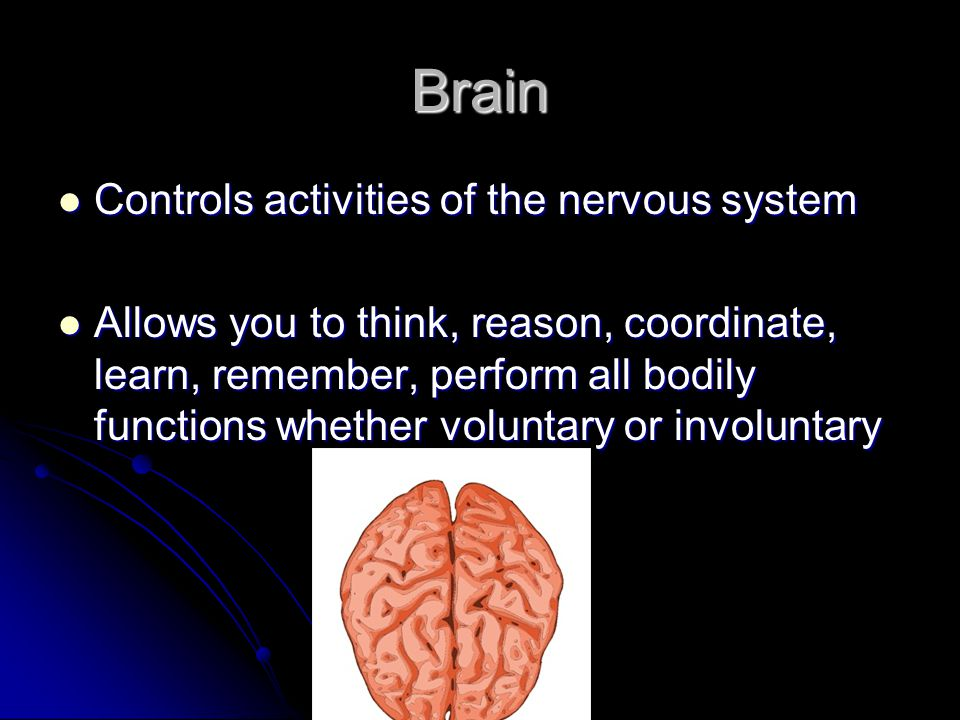 Brain Controls activities of the nervous system