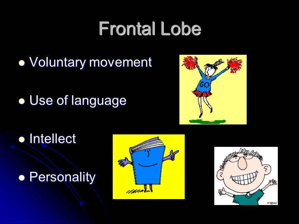 Frontal Lobe Voluntary movement Use of language Intellect Personality