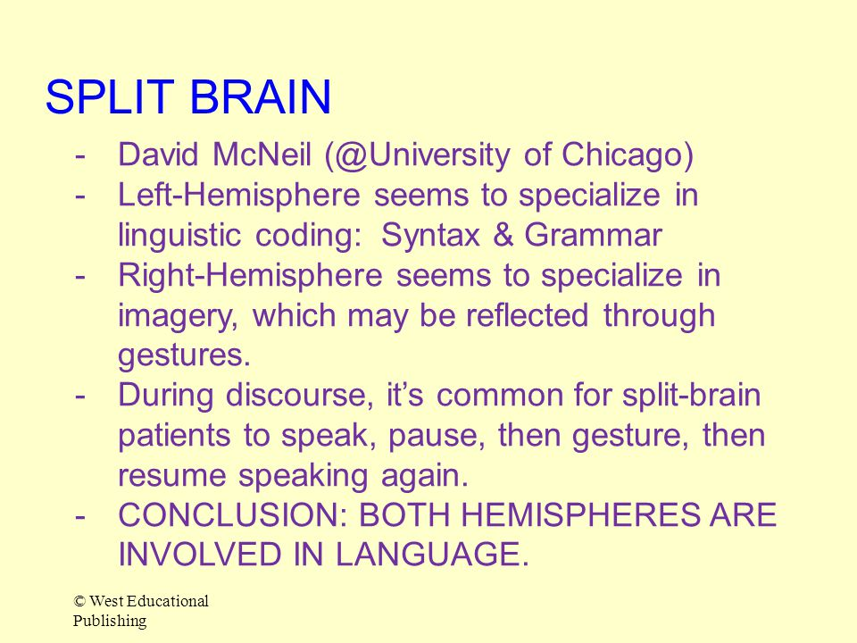 SPLIT BRAIN David McNeil (@University of Chicago)