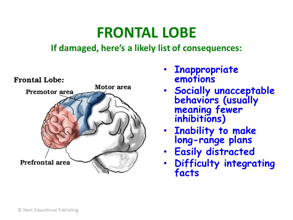 FRONTAL LOBE If damaged, here's a likely list of consequences: