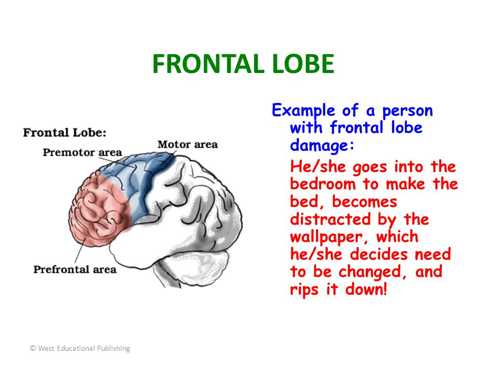 FRONTAL LOBE Example of a person with frontal lobe damage:
