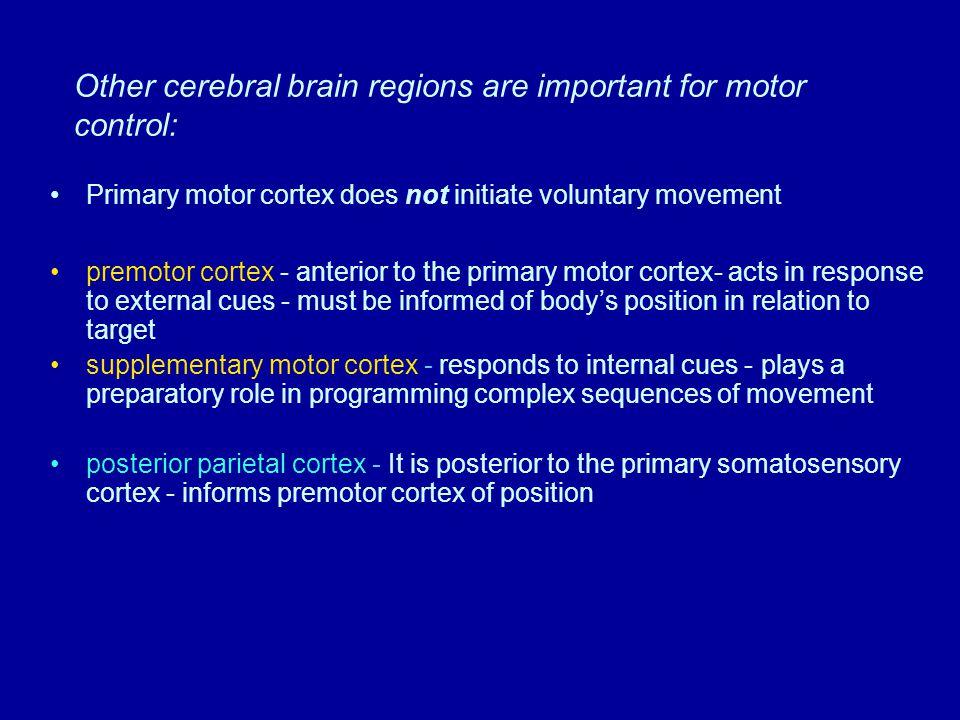 Figure 5.11 (2) Page 149 Sensory homunculus Left hemisphere