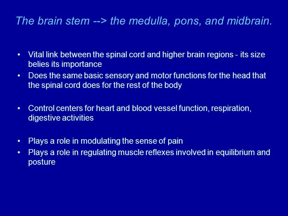 Hypothalamus - homeostatic control