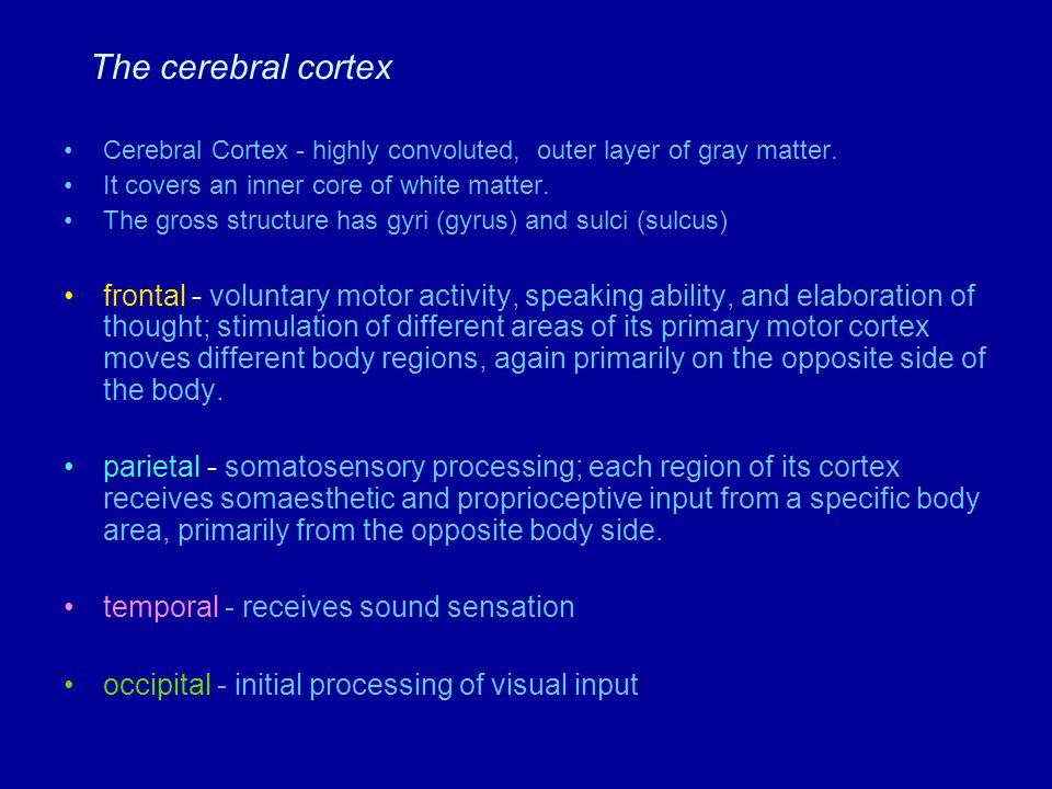 Table 5.3 (1) Page 144 Brain component Cerebral cortex Cerebral cortex