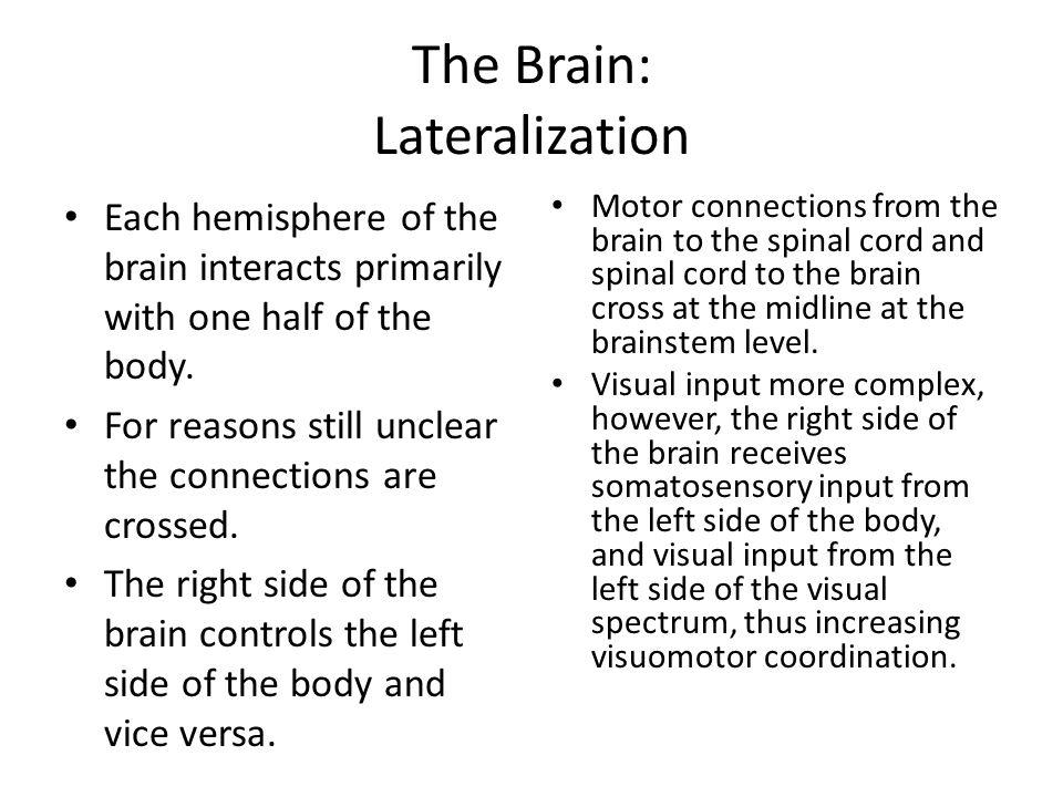 The Brain: Lateralization