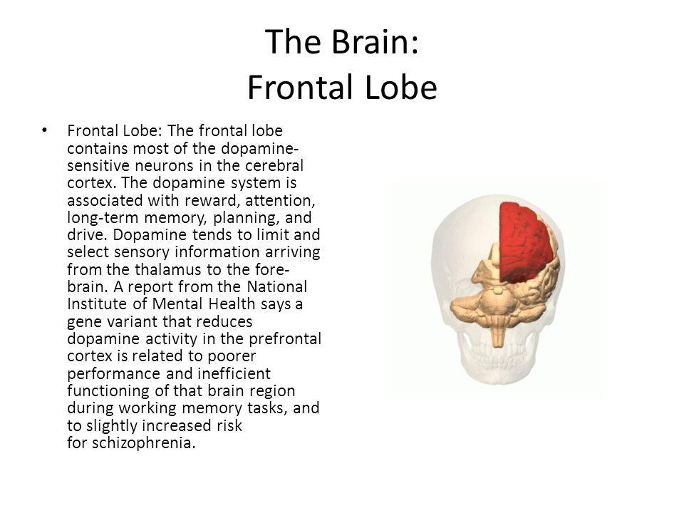 The Brain: Frontal Lobe