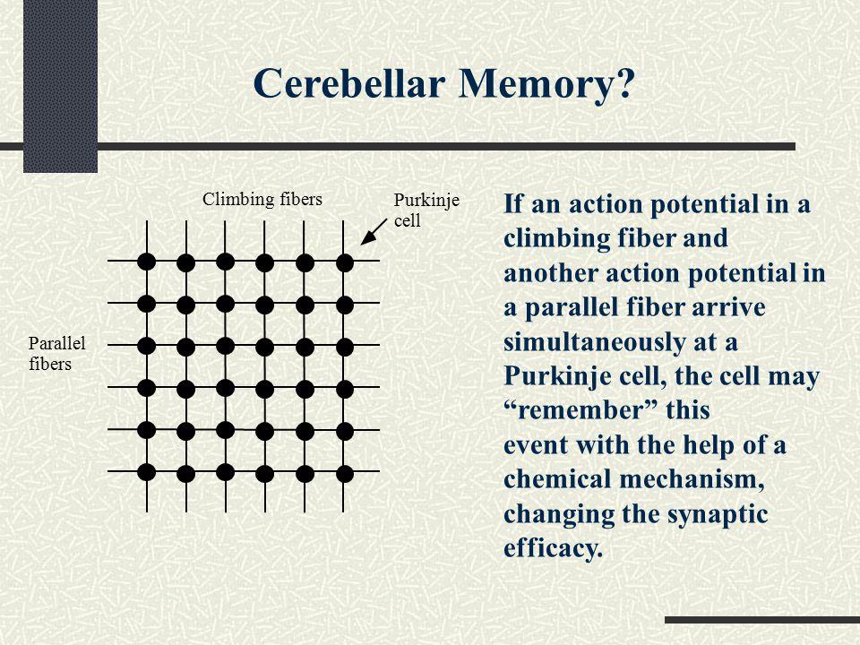 Cerebellar Memory