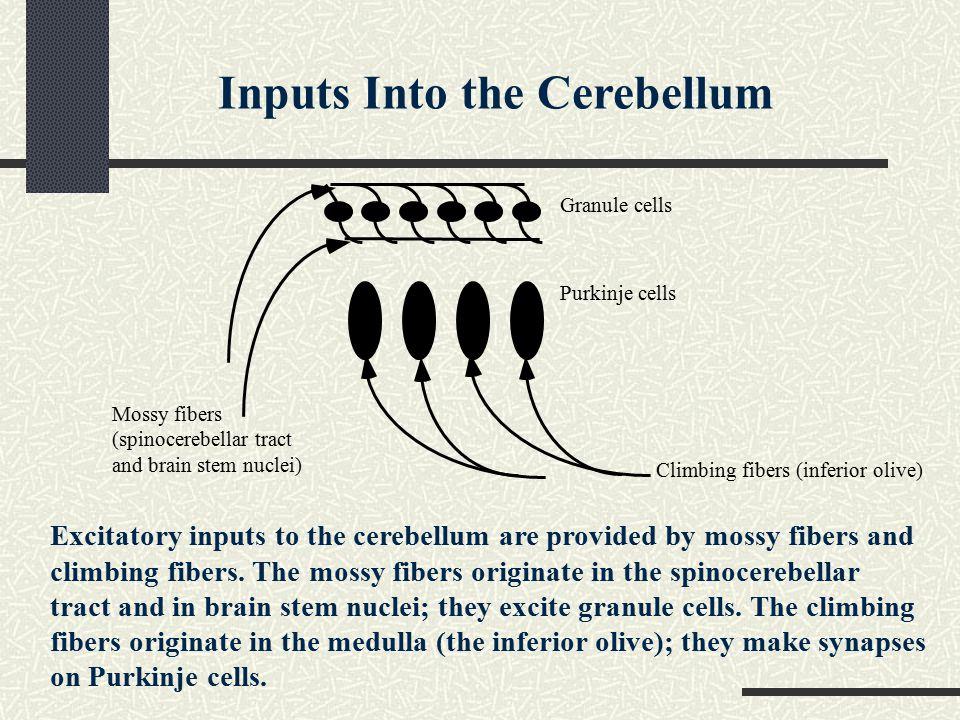 Inputs Into the Cerebellum
