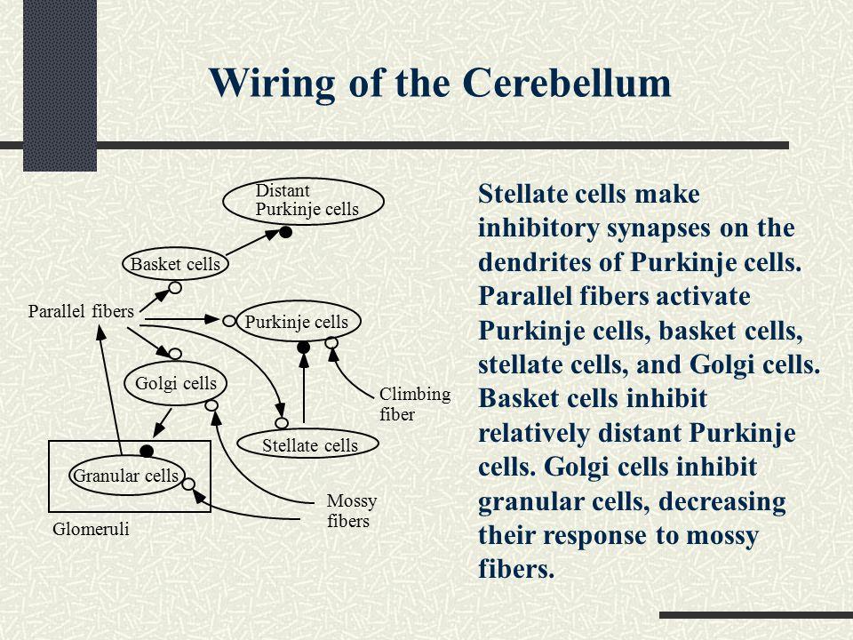 Wiring of the Cerebellum