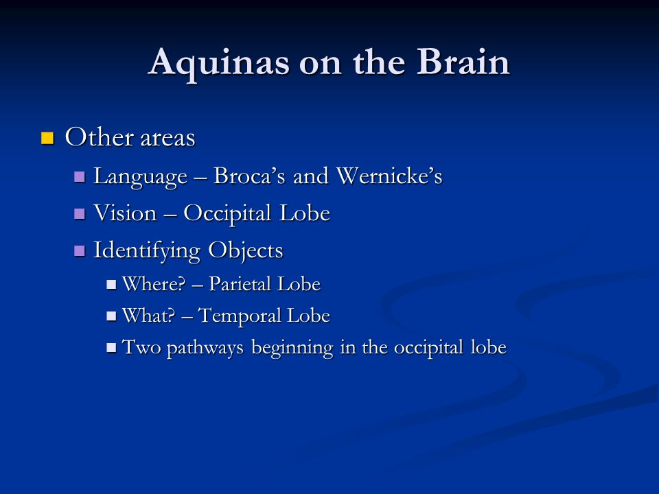 Aquinas on the Brain Other areas Language – Broca's and Wernicke's