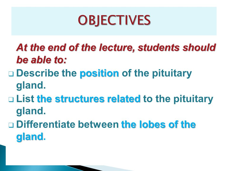 OBJECTIVES Describe the position of the pituitary gland.
