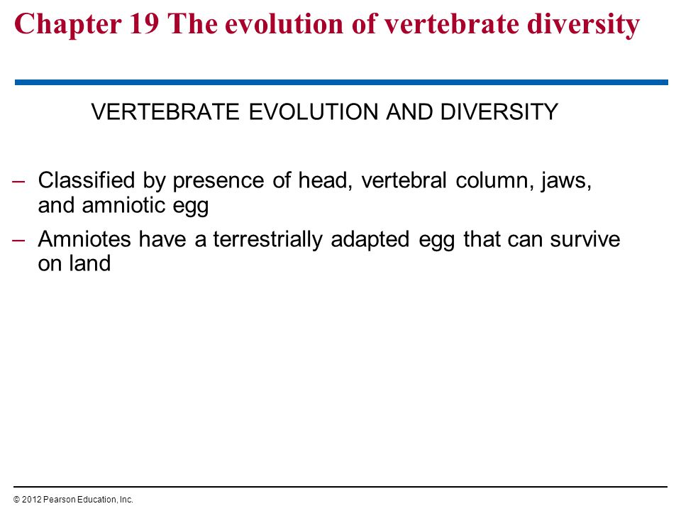 Chapter 19 The evolution of vertebrate diversity