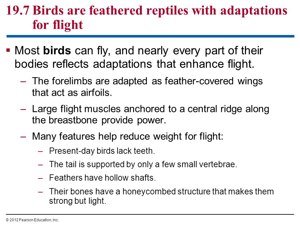 19.7 Birds are feathered reptiles with adaptations for flight