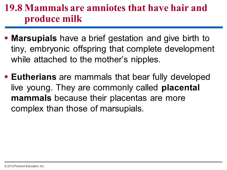 19.8 Mammals are amniotes that have hair and produce milk