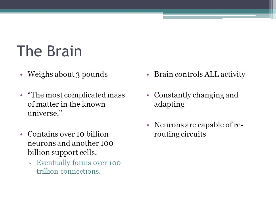 The Brain Weighs about 3 pounds
