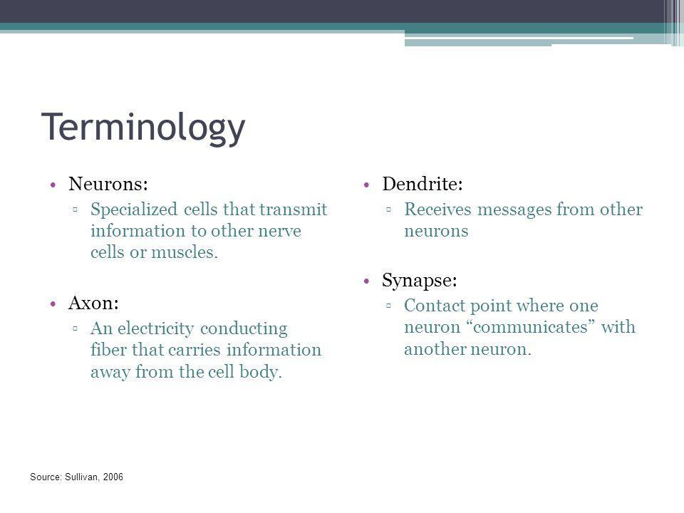 Terminology Neurons: Axon: Dendrite: Synapse: