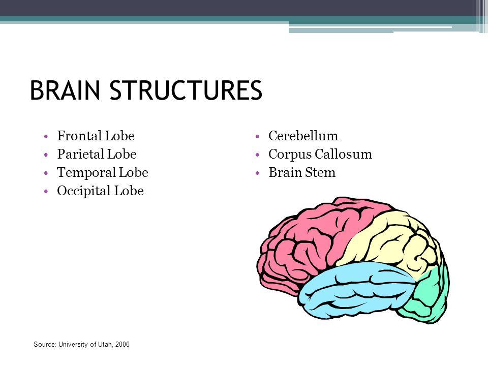 BRAIN STRUCTURES Frontal Lobe Parietal Lobe Temporal Lobe