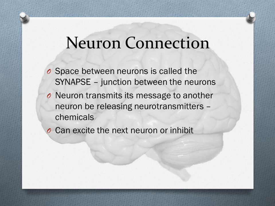 Neuron Connection Space between neurons is called the SYNAPSE – junction between the neurons.
