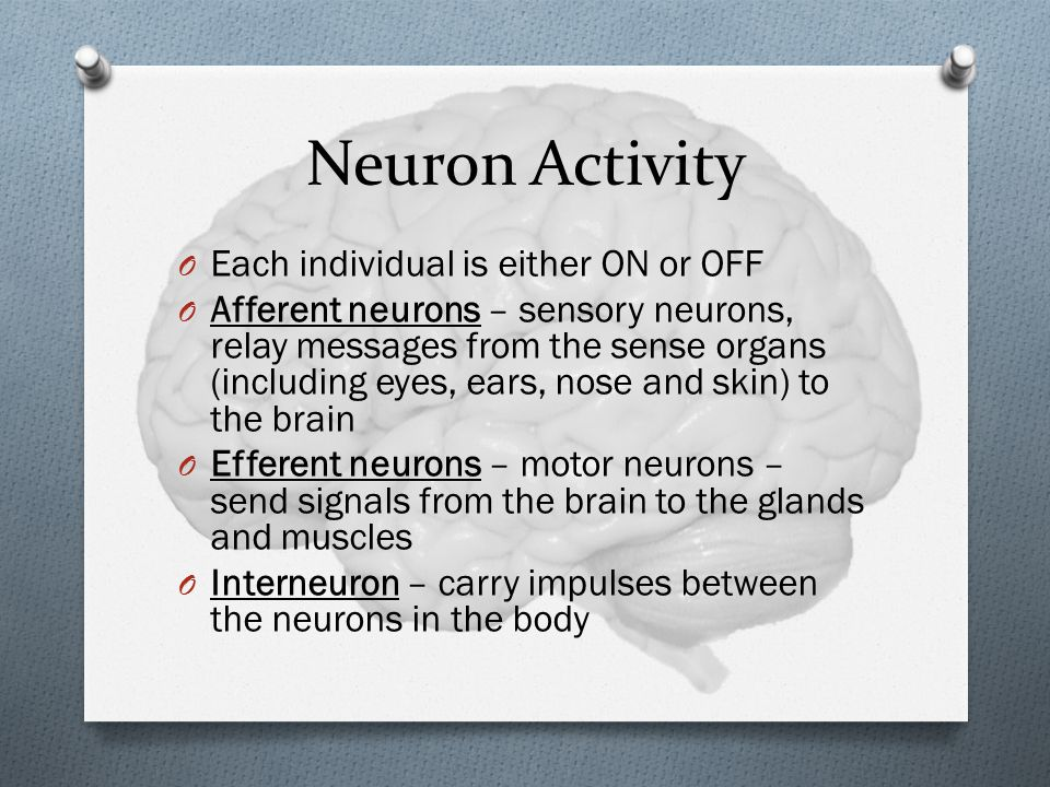 Neuron Activity Each individual is either ON or OFF
