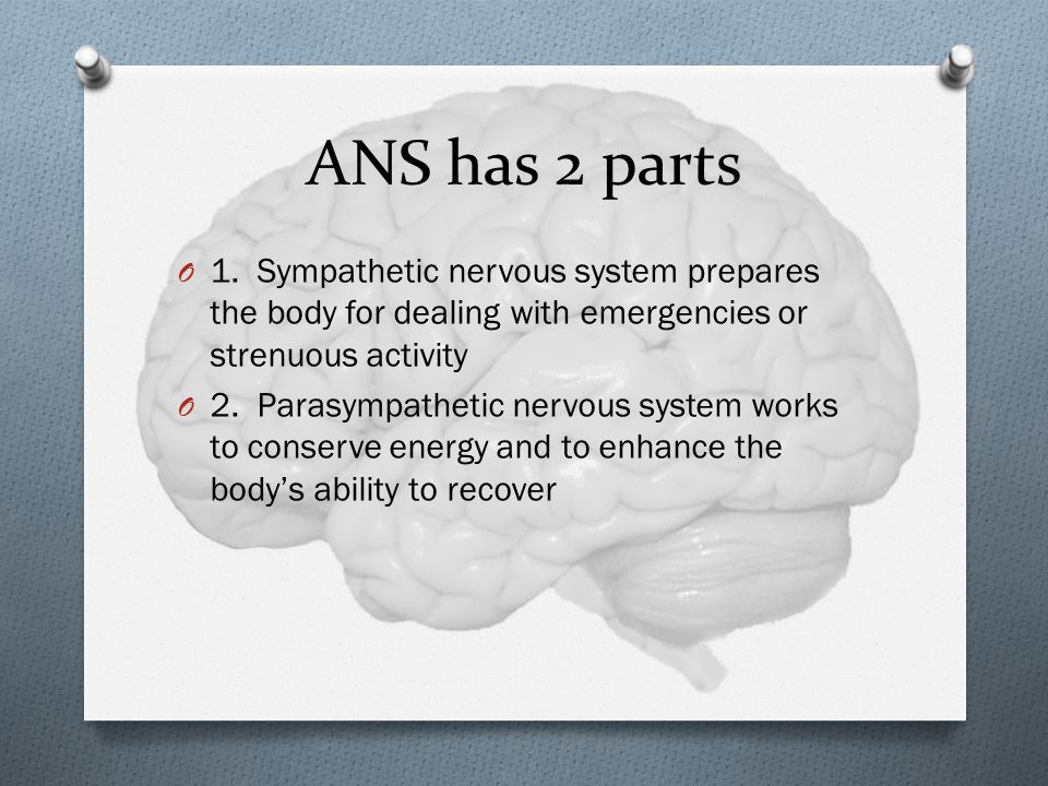 ANS has 2 parts 1. Sympathetic nervous system prepares the body for dealing with emergencies or strenuous activity.