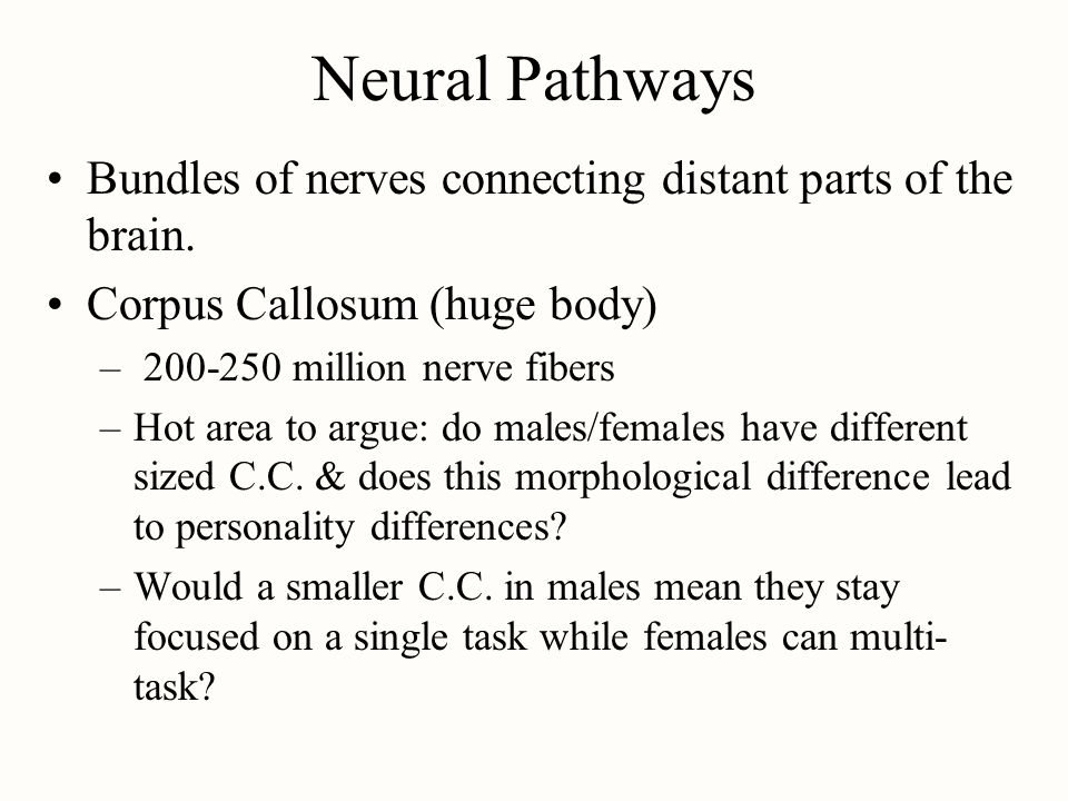 Neural Pathways Bundles of nerves connecting distant parts of the brain. Corpus Callosum (huge body)