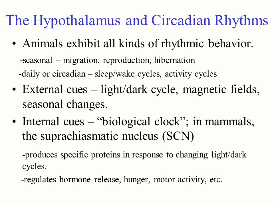 The Hypothalamus and Circadian Rhythms